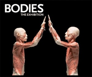 Bodies The Exhibition