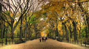 The Mall at Central Park in Fall