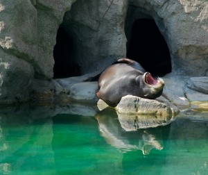 Sea Lion Feeding at The Bronx Zoo