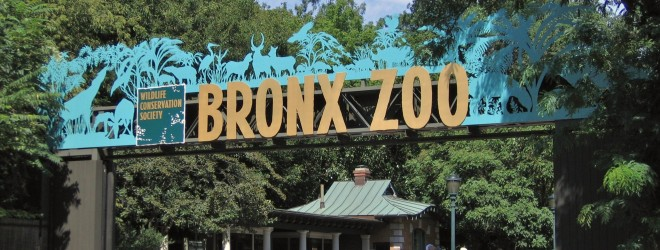 The Bronx Zoo – A Paradise for Kids and Adults Alike