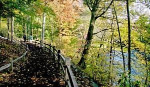 Thain Family Forest at the New York Botanical Garden