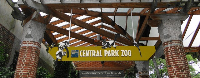 Central Park Zoo Hours, Tickets and More – A Cozy NYC Zoo